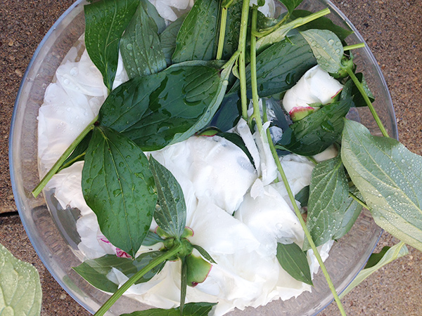 Get the Ants Off Your Peonies | Hannah & Husband