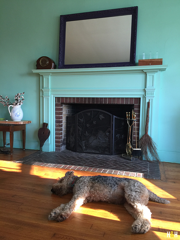 Dexter sunning in the parlor at Rivermont | Hannah & Husband