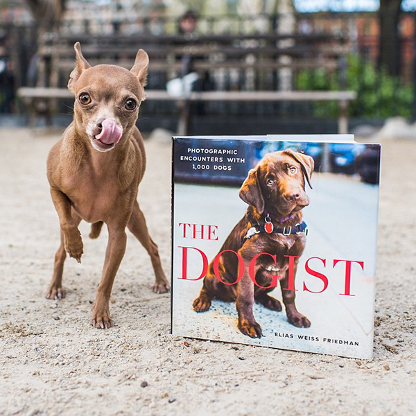 [image source: The Dogist]