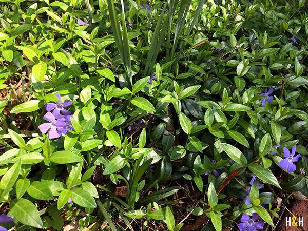 Spring Blooms | Hannah & Husband